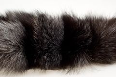 Female fur collar foxes Stock Images