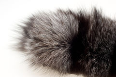 Female fur collar foxes Royalty Free Stock Photos
