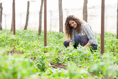 Female garden worker planting seed Royalty Free Stock Image