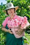 Female gardener with basket of rose cuttings. Proud female gardener wearing eyeglasses  green apron and straw hat holding pink basket full of rose flower bloom Royalty Free Stock Images