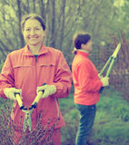 Female gardener cuts branches Stock Image