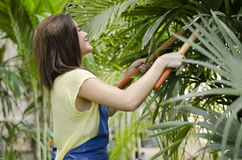 Female gardener cutting branches Royalty Free Stock Photography