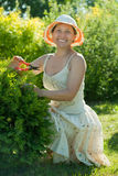 Female gardener cutting thuja Royalty Free Stock Photography