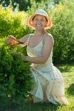 Female gardener cutting thuja royalty free stock photography