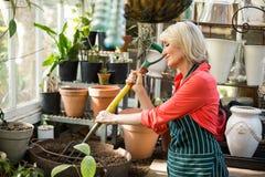 Female gardener digging soil with gardening fork Royalty Free Stock Photos
