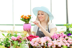 Female gardener examining flower Royalty Free Stock Photos