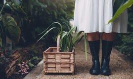 Gardener in greenhouse with plants in basket on floor Stock Image