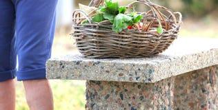 Female gardener. Stock Photos