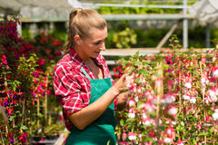 Female gardener in market garden or nursery Stock Photos