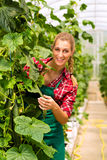 Female gardener in market garden or nursery Stock Image