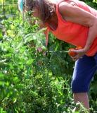 Female gardener. Royalty Free Stock Photo