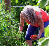 Female gardener. Royalty Free Stock Image
