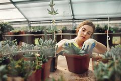 Female worker gardening at greenhouse Royalty Free Stock Photography