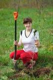 Female gardener planting tree Royalty Free Stock Image
