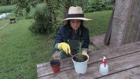 Female gardener with pots near table stock video footage