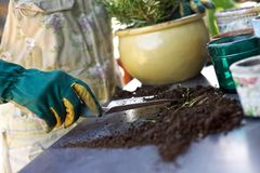 Female gardener potting new plants Royalty Free Stock Photo