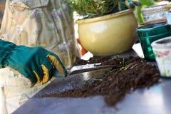 Female gardener potting new plants Royalty Free Stock Photo