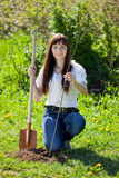Female gardener setting tree Stock Photos