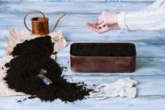 Female gardener sowing herbs Royalty Free Stock Image
