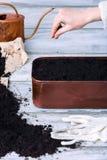 Female gardener sowing herbs Royalty Free Stock Photo