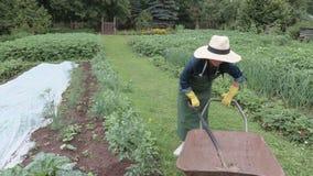 Female gardener with spade shovel near wheelbarrow stock footage