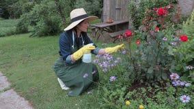 Female gardener with spraying bottle near flowers stock video