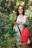 Female gardener spraying tomato plant Stock Photography
