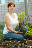 Female gardener with  sprouts Stock Images