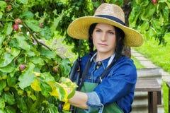 Female gardener in straw hat near apple tree Stock Images