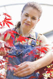 Female gardener trimming maple branch Royalty Free Stock Images