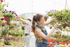 Female gardener trimming plants with colleague in background at greenhouse Royalty Free Stock Image
