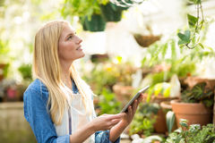 Female gardener using digital tablet while inspecting plants Royalty Free Stock Images