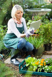 Female gardener using digital tablet while working. Mature female gardener using digital tablet while working at greenhouse Stock Photos