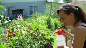 Female Gardener Watering Flowers in Summer Day. Female Gardener Watering Flowers in a Garden with a Spray Bottle in Sunny Summer Day. Slow Motion. Farming stock video