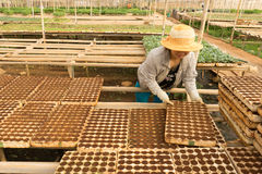 Female gardener working in garden Stock Photo