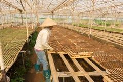 Female gardener working in garden Stock Photos