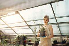 Female gardener working in greenhouse. Beautiful young lady in plant nursery holding cactus. Female gardener working in greenhouse Stock Image