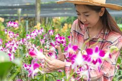 Female gardeners wear a plaid shirt and wear a hat. Hands holding scissors for cutting orchids.  stock photos