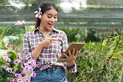 Female gardeners wear plaid shirts. There were orchids picking up the ears, the hand holding the tablet and pointing fingers on. The tablet and smiling with joy royalty free stock images