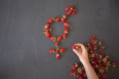 The female gender symbol is equal to the male concept of gender equality made with strawberries. The female gender symbol is equal to the male concept of gender stock photo