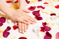 Female gentle hands crossed surrounded with petals Stock Image