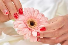 Female gentle hands holding gerbera. Peach color gerbera in female hands with romantic manicure. Feminine tenderness and care Stock Photos