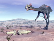 Female gigantoraptor going to its nest - 3D render Royalty Free Stock Images