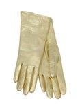 Female gloves Stock Photos