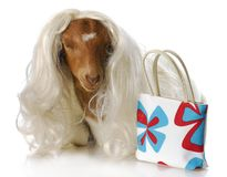 Female goat Royalty Free Stock Photography