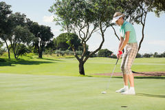 Female golfer putting her ball Royalty Free Stock Photography