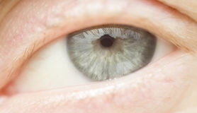Female gray eye macro. Open female gray eye macrofoto Royalty Free Stock Photos