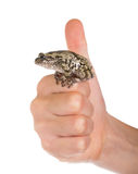 Female gray tree frog on hand. Hand showing that everything is f Royalty Free Stock Image