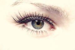 Female green eye Stock Photo