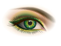 Female green eye. Green female eye and makeup. Realistic vector image Stock Photography